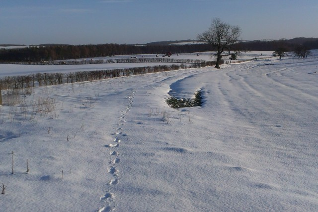 First Tracks at Stile-5